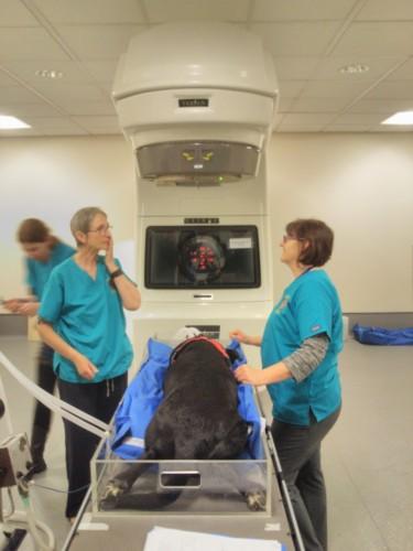 ケンブリッジ 放射線治療